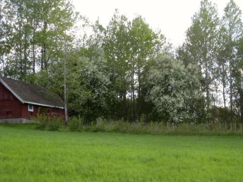 Sommeridyll, Holstad i Ås